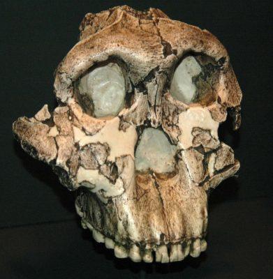 Ursprünge, Umbrüche, Umwege: Sechs Millionen Jahre Mensch
