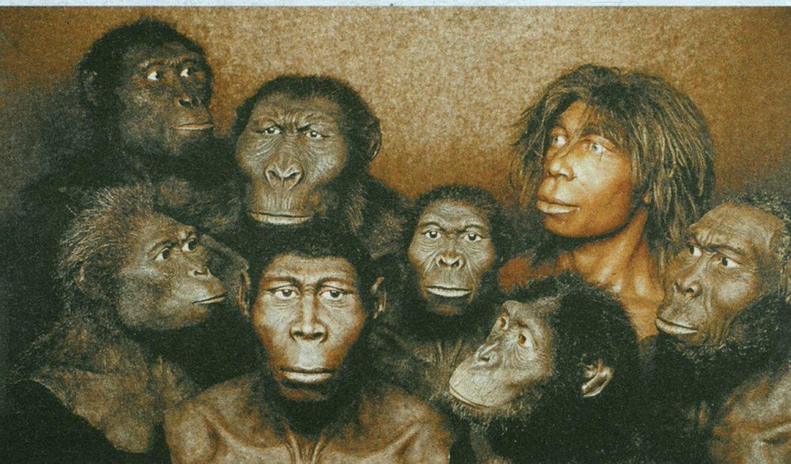 Sechs Millionen Jahre Mensch und ein paar Umwege